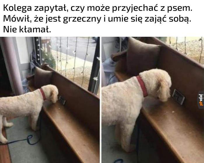 Dobra psina