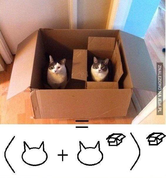 Kocia matematyka