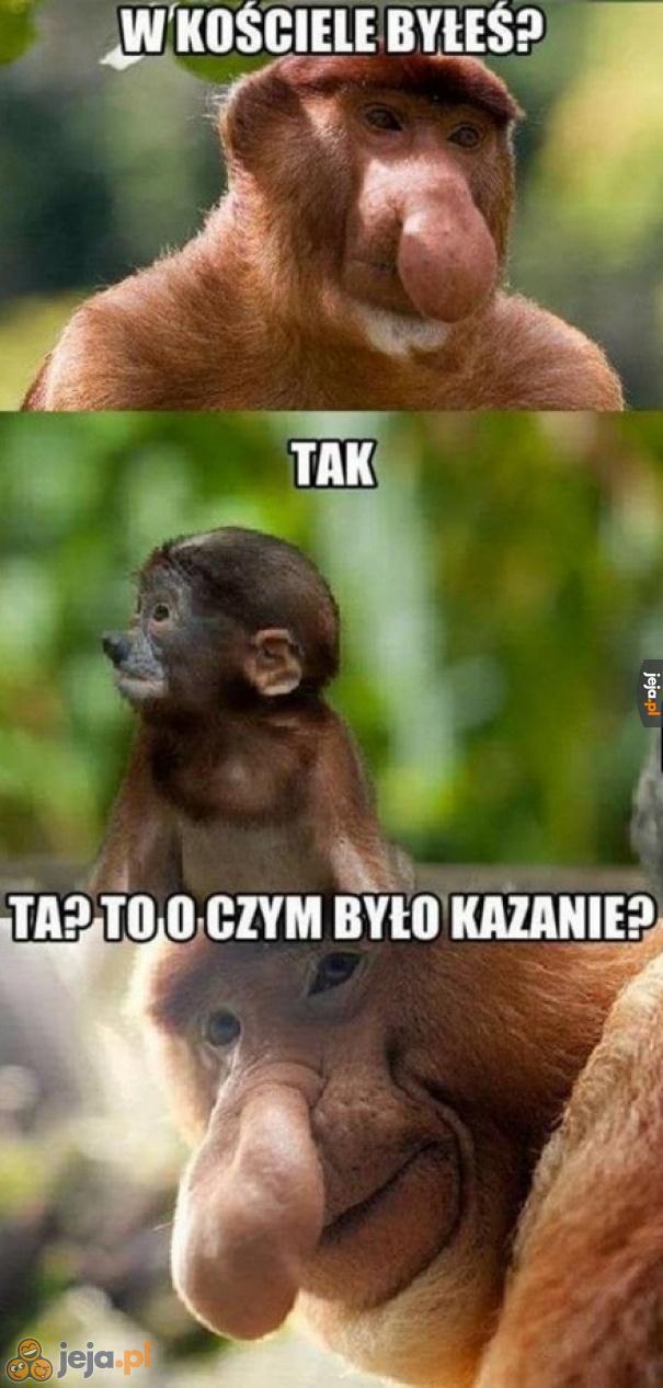 Sprytny ten Janusz...