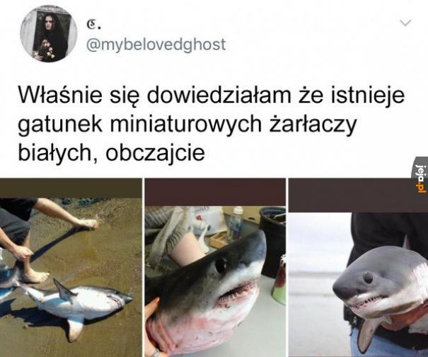 Straszne rekiny
