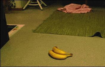 Banany są przerażające