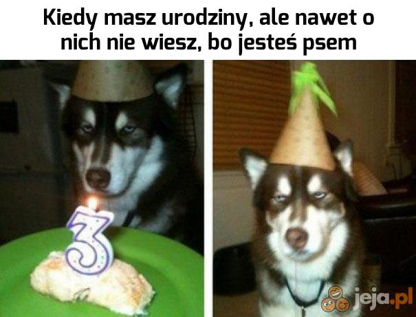 A podobno psy są takie mądre