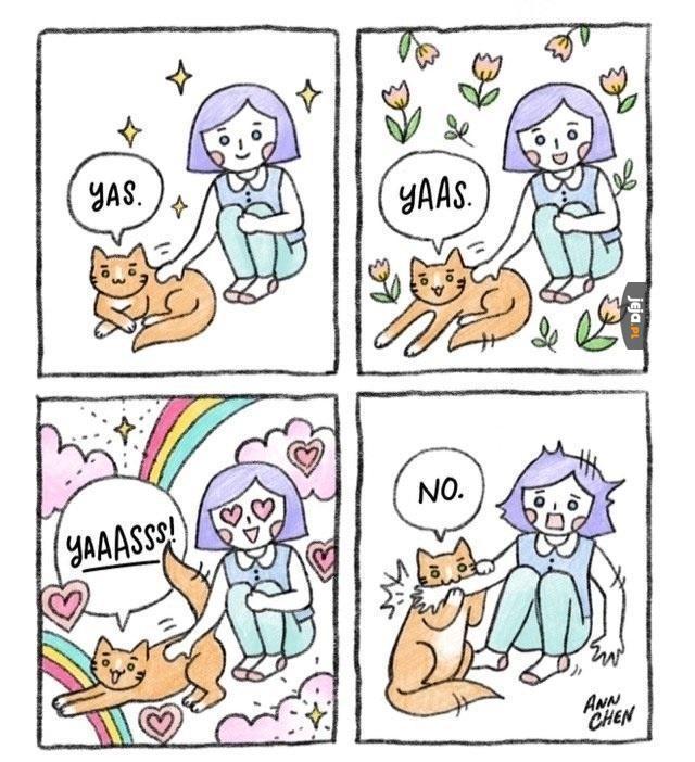 Typowe kocie zachowanie