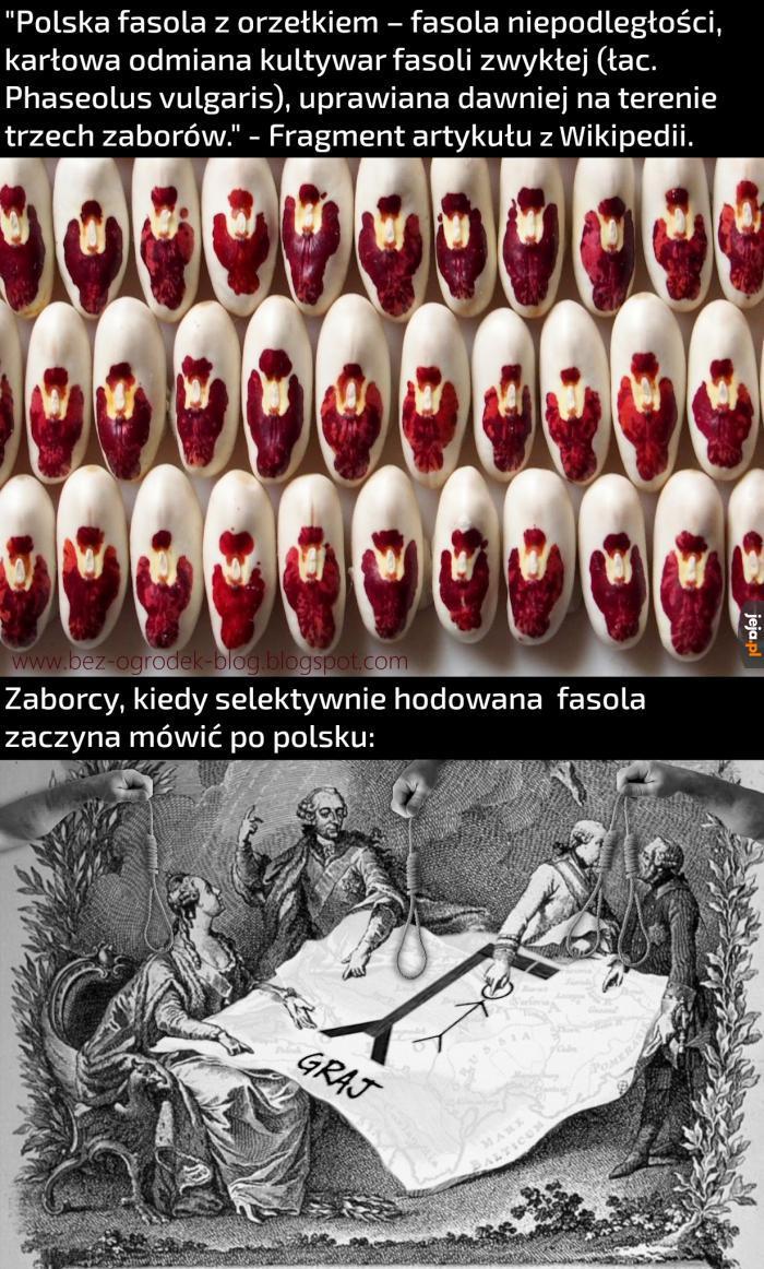 Polskojęzyczna fasola