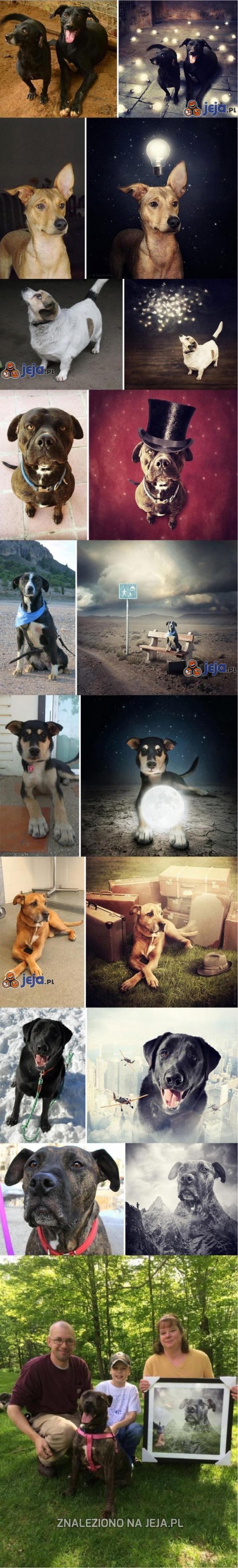 Surrealistyczne fotomontaże porzuconych psów, zachęcające do adopcji