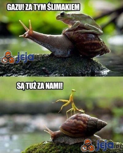Gazu! Za tym ślimakiem!