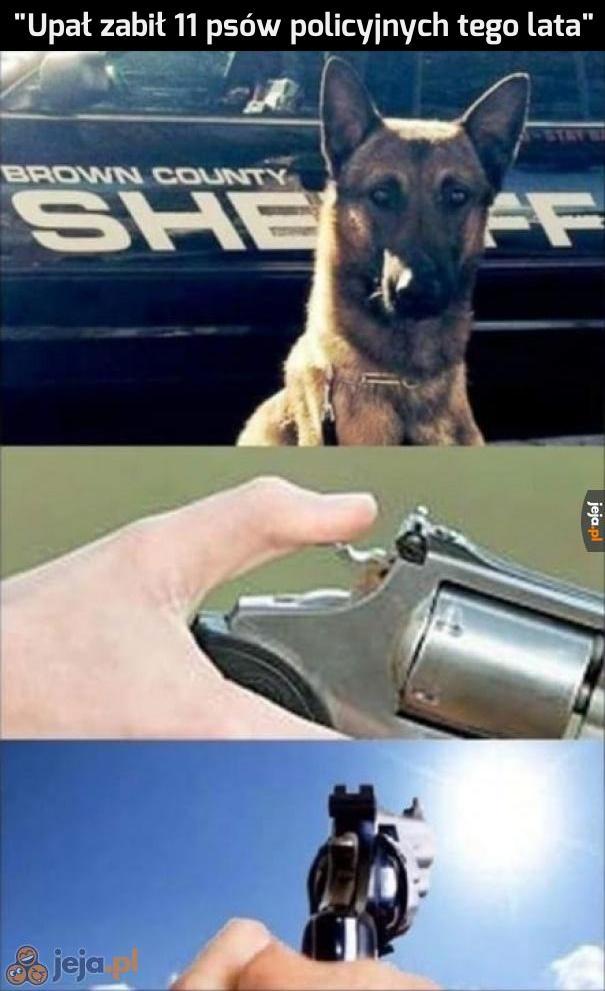 Nikt nie będzie zadzierał z psami, nawet słońce