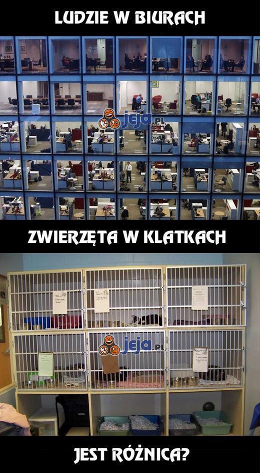 Ludzie w biurach vs zwierzęta w klatkach