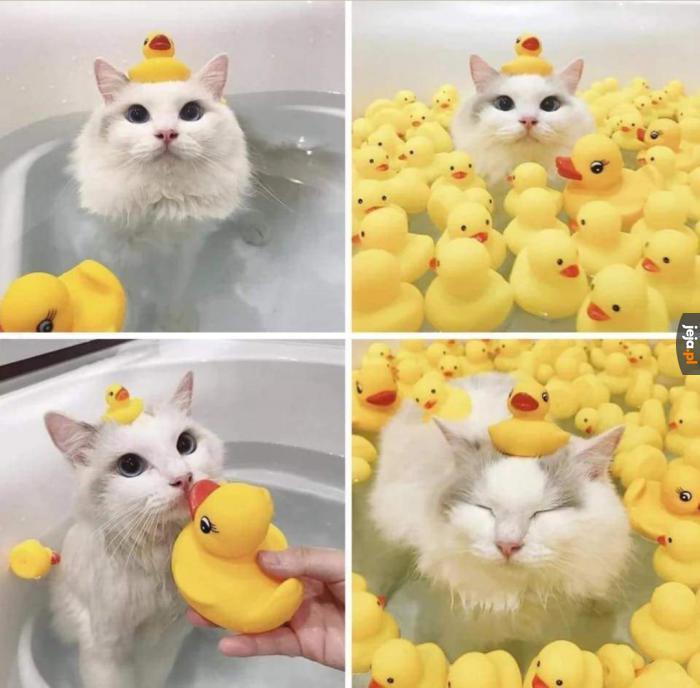 Kaczkowa kąpiel