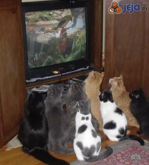 Ulubiony program tv