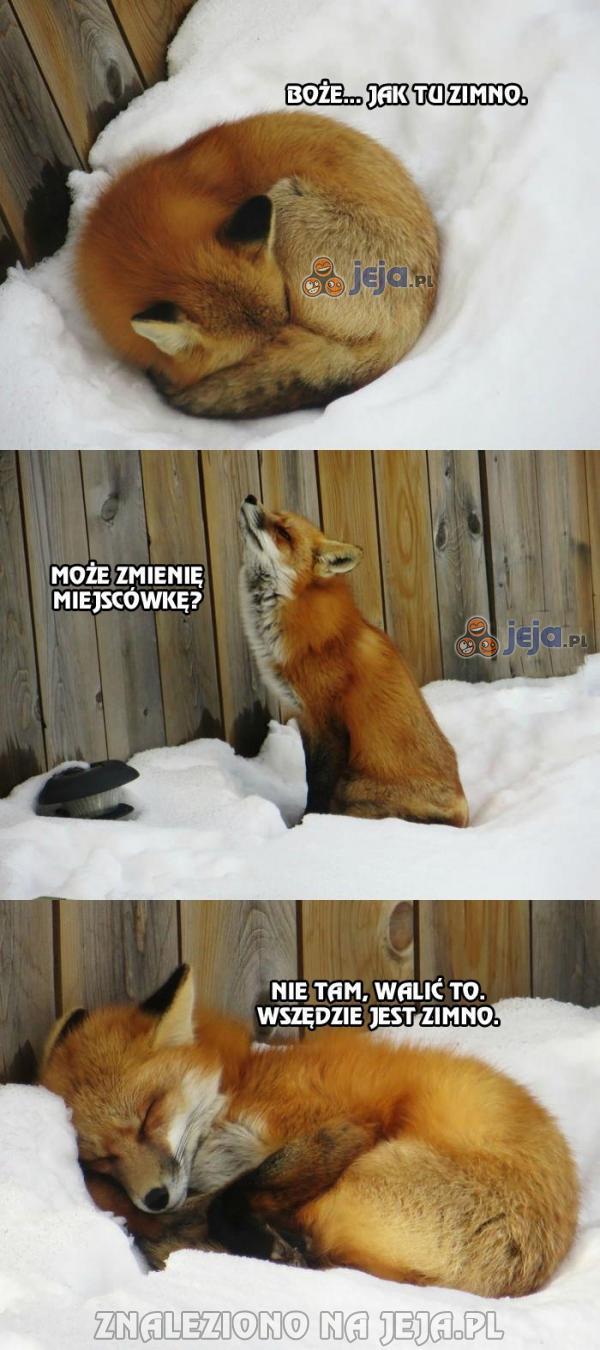 Lis ma już wyrąbane