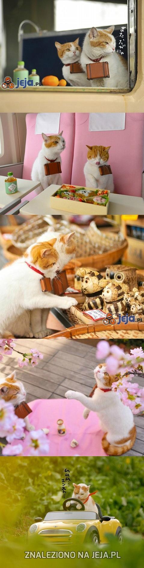 Kociaki w podróży
