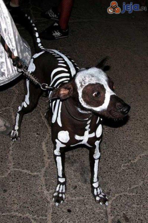 Pies szkieletor