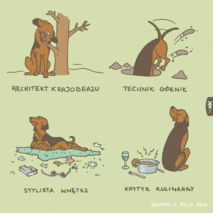 Pies jest wszechstronnie wykształcony