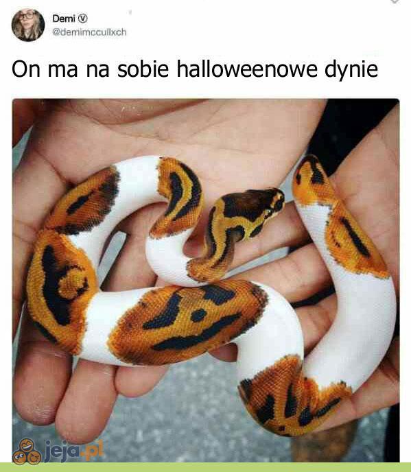Najstraszniejszy wąż świata