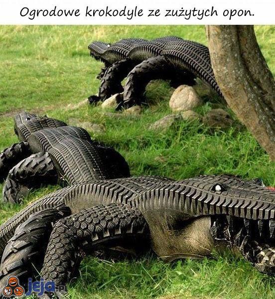 Krokodyl ogrodowy