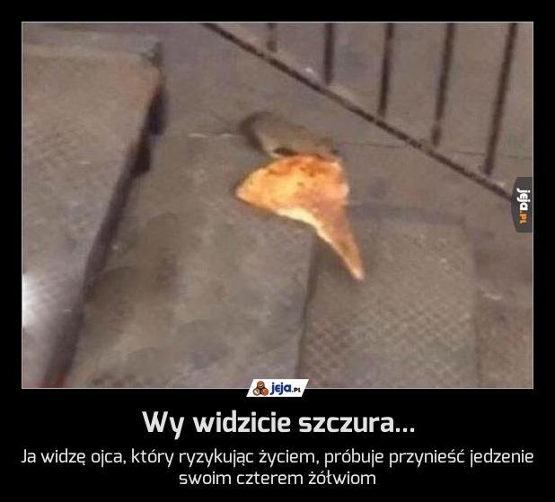 Wy widzicie szczura...