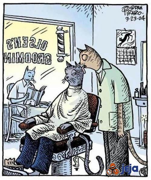 Koci fryzjer