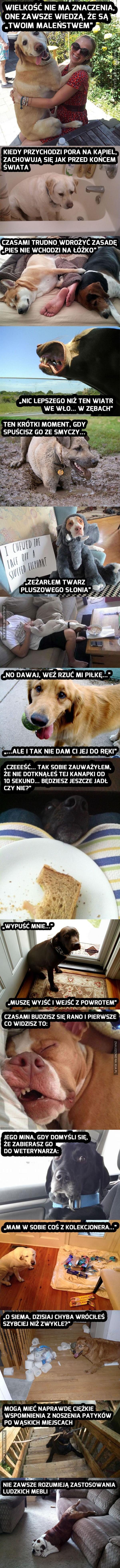 Kto ma psa, ten wie