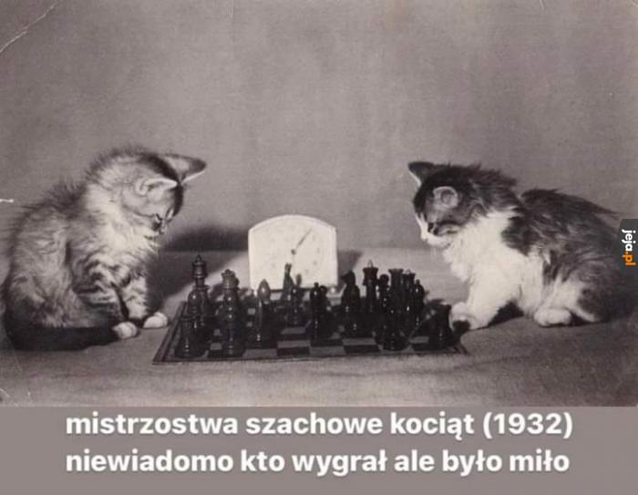 Kitku szachista