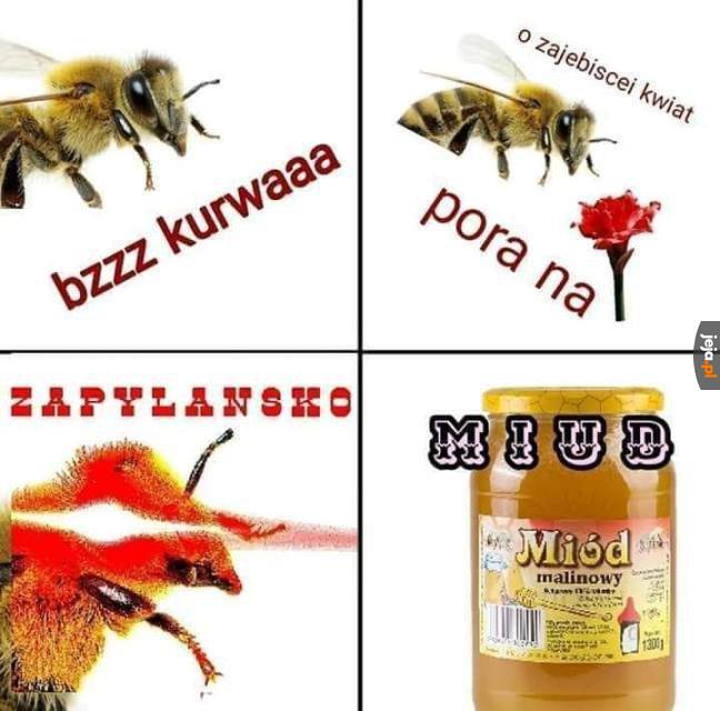 Dzień z życia pszczoły