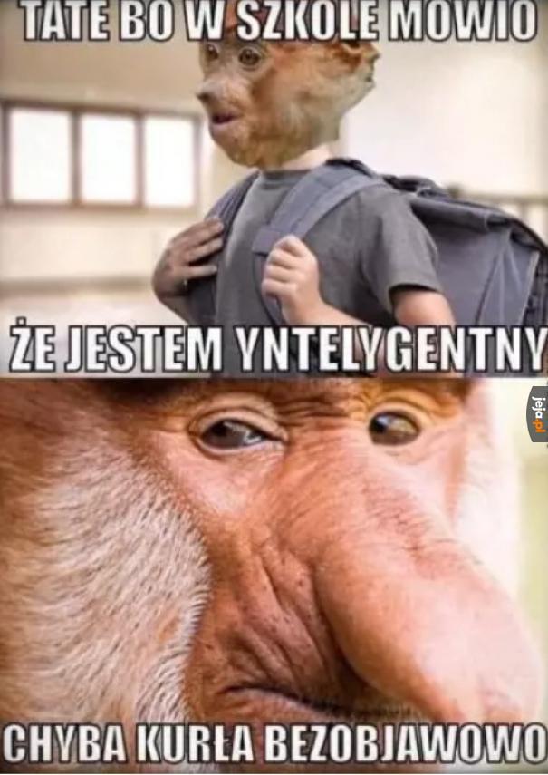 Yntelygencja