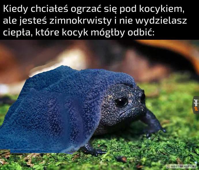 Problemy żabek pierwszego świata