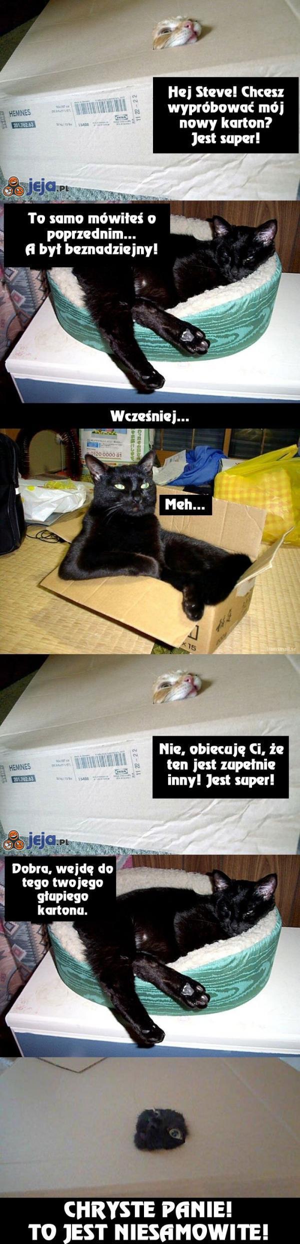 Koty i pudło
