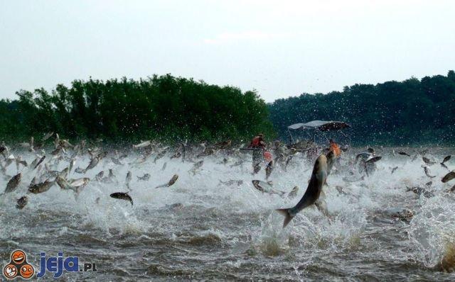 Skaczące ryby