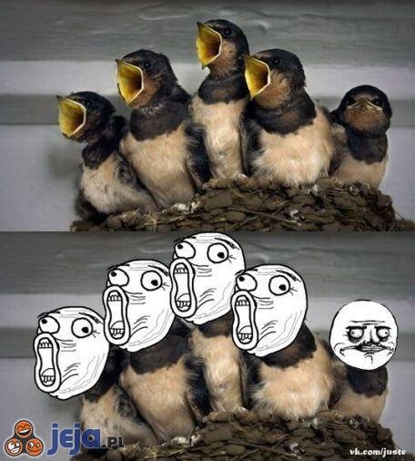 Ptaszki śpiewają
