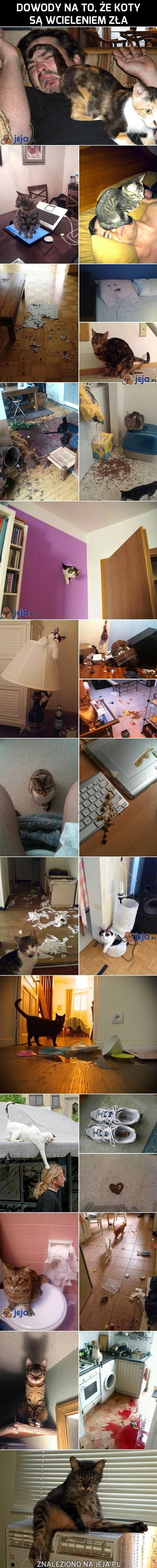 Dowody na to, że koty są wcieleniem zła!