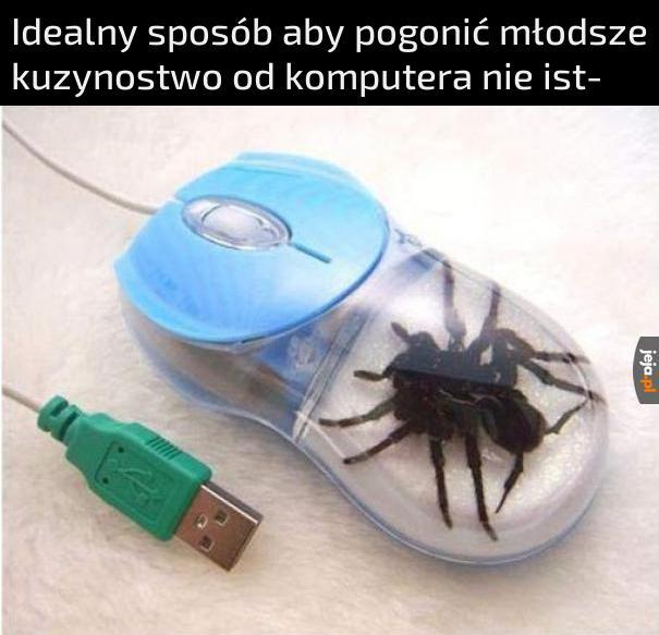 Uroczy ten pająk jest