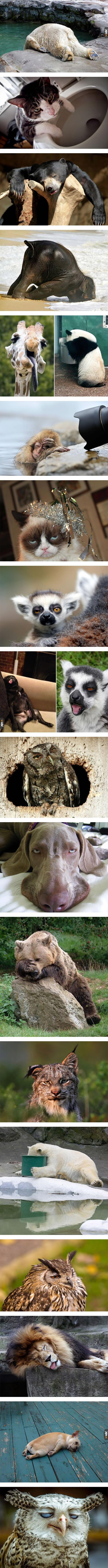 Zwierzęta też miewają kaca