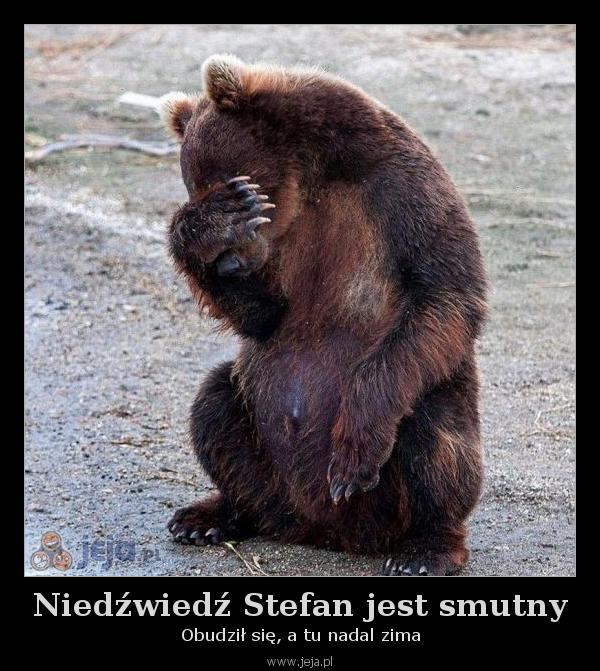 Niedźwiedź Stefan jest smutny