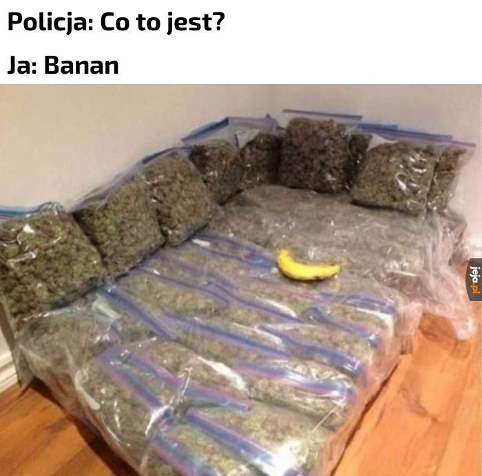 Nielegalna plantacja bananów