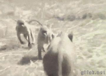 Epicka ucieczka