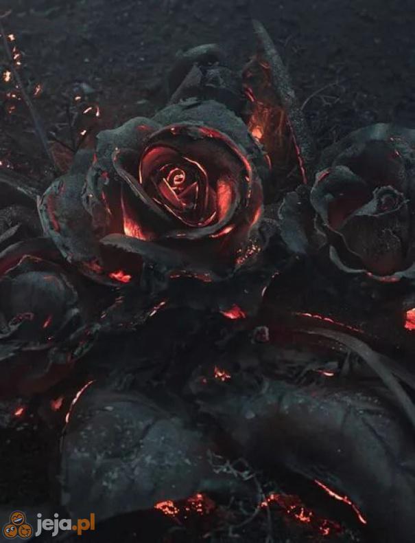 Róża po pożarze