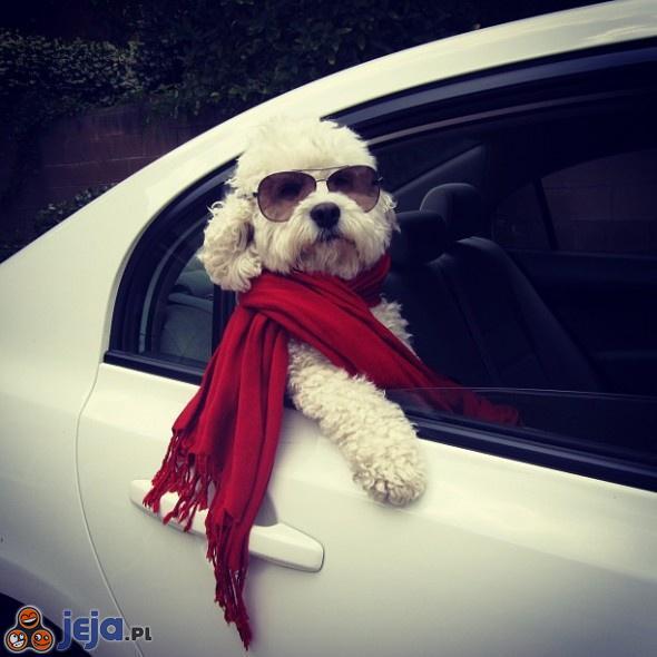 Pies pełen wdzięku