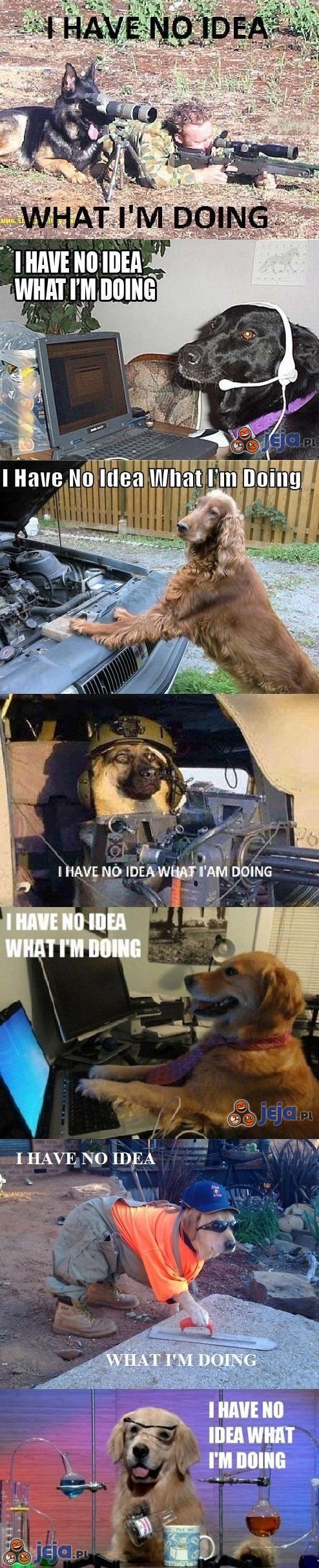 Te niemądre psy
