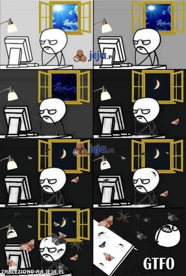 Robale atakują nocą