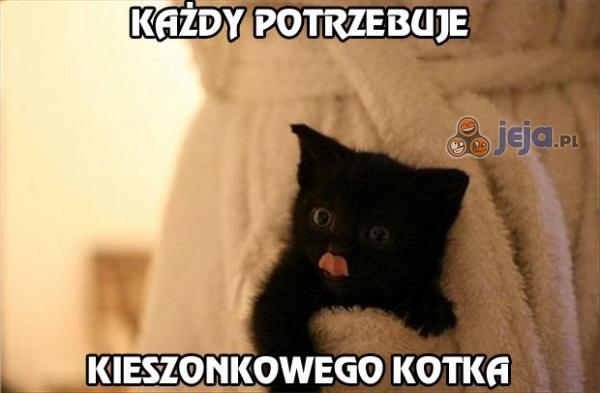 Każdy potrzebuje kieszonkowego kotka