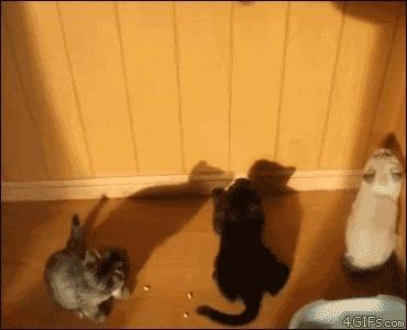 Cień bije laser!
