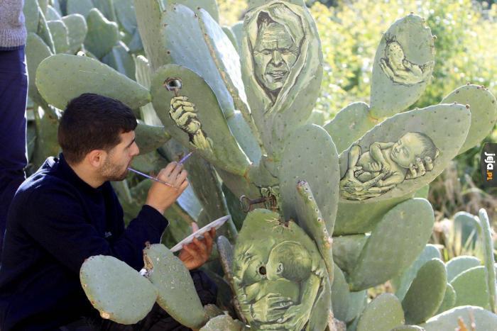 Malowanie na kaktusach. Bo czemu nie?