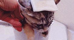 Ciepła kąpiel dla koteła