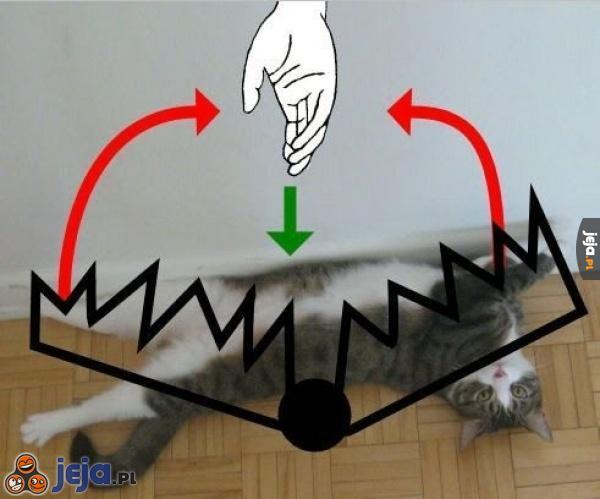 Jak działa kocia pułapka
