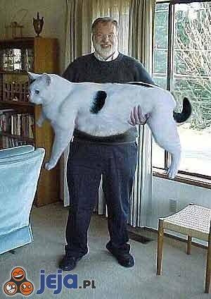Duży kotek