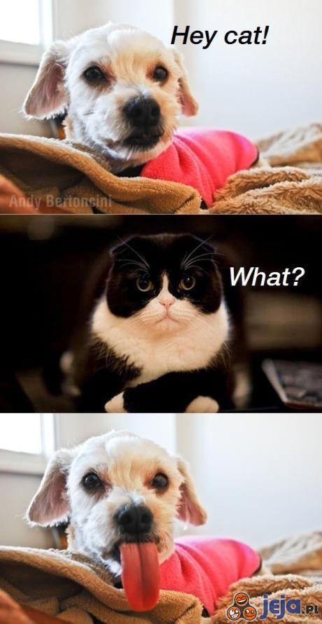 Hej kocie