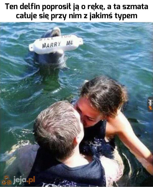 Biedny odrzucony delfin