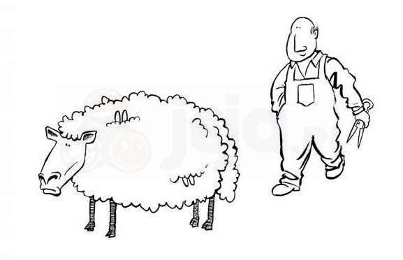 Samobójstwa zajączka: Strzyżenie owiec