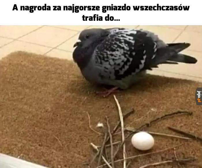 To ja, jeśli w przyszłym życiu będę gołębiem
